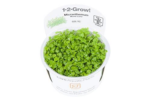 Tropica 1-2-GROW! Micranthemum Monte Carlo - In-Vitro Aquariumpflanze