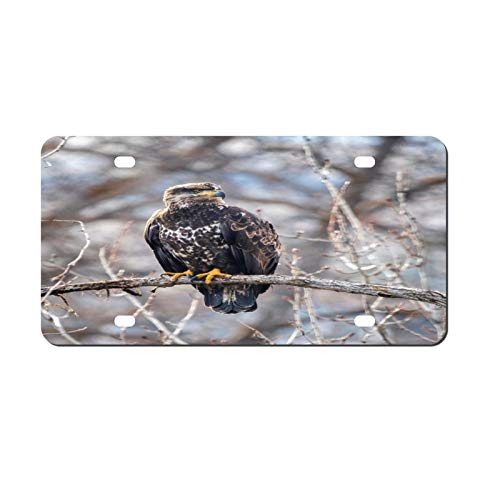 Brown Eagle License Plate Aluminum Metal License Plate Car Tag Novelty Home Decoration for Women Girls Men Boys 6 inch X 12 inch