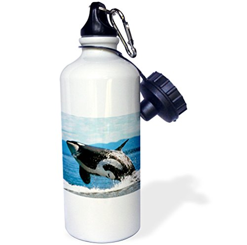 3dRose Killer Whale Airbourne Sports Water Bottle, 21 oz, White