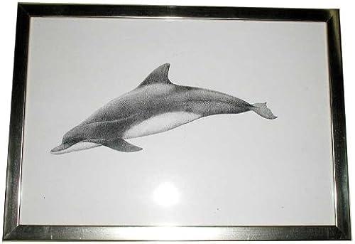Delfinbild mit Rahmen
