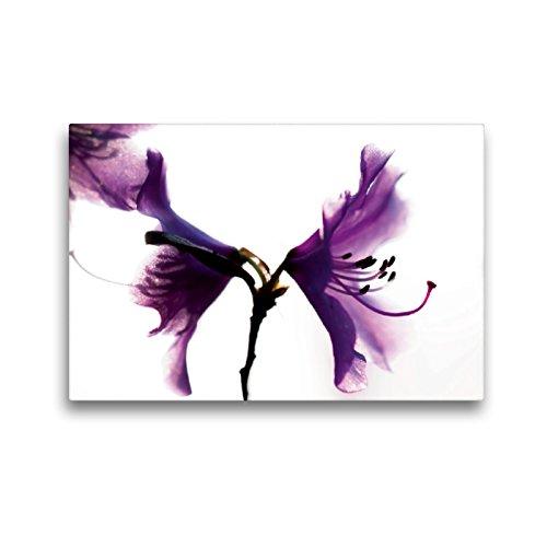 Premium Textil-Leinwand 45 x 30 cm Quer-Format Rhododendron 'Praecox' | Wandbild, HD-Bild auf Keilrahmen, Fertigbild auf hochwertigem Vlies, Leinwanddruck von Erwin Renken