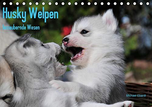 Husky Welpen (Tischkalender 2021 DIN A5 quer)