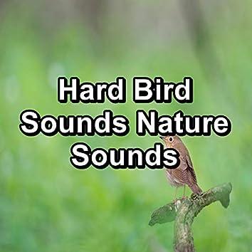 Hard Bird Sounds Nature Sounds