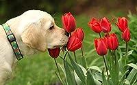 PQGHJ ジグソーパズル、パズル大人子供パズル木製1000ピース不可能なDIYパズルゲーム教育玩具ファミリーエンターテインメントバラの花と犬