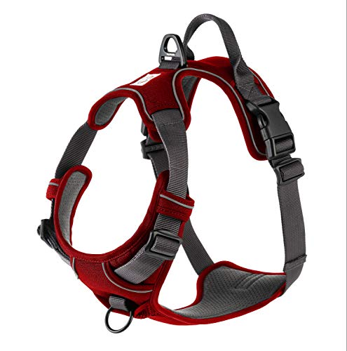 What Size Harness for My Dog