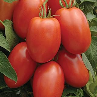 Tomato Roma Great Heirloom Garden Vegetable 6,000 Seeds