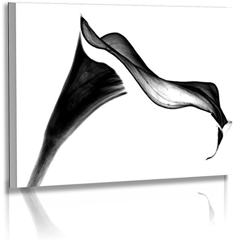 Fotoatelier Dirk Haas Premium Aludibond XXL - Natur - Blumenfotos - Bilder - Schwarz - Weiss - Calla - Blume - Aludibond : 45 cm x 30 cm