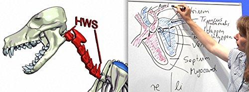 Praxisorientierte Anatomie und Physiologie beim Hund, Katze und Pferd - Teil 1