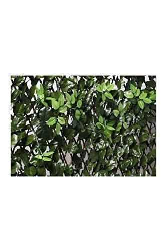 Catral Deutschland GmbH 43040010 Ausziehbares Rankgitter mit Blättern und knospen 1x2m, Transparent, 127 x 38 x 3 cm