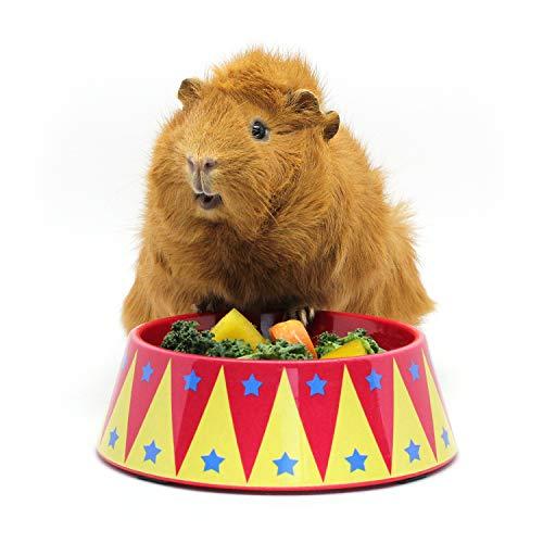 HAYPIGSMeerschweinchen Zubehoer und Spielzeug - FOOD CRAVING TAMER Meerschweinchen Napf im Zirkus-Look -Meerschweinchen Futternapf–Futtertrog für Igel–Kaninchen Napf– Schüssel für Kleintiere