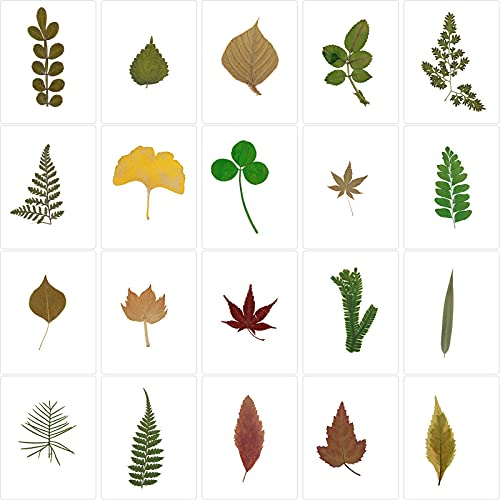 20 Pieces Handmade Leaf Bookmark Plant Specimens Bookmark Colorful Assorted Page Markers Over-Plastic Bookmarks for Reading School Classroom Library and Home
