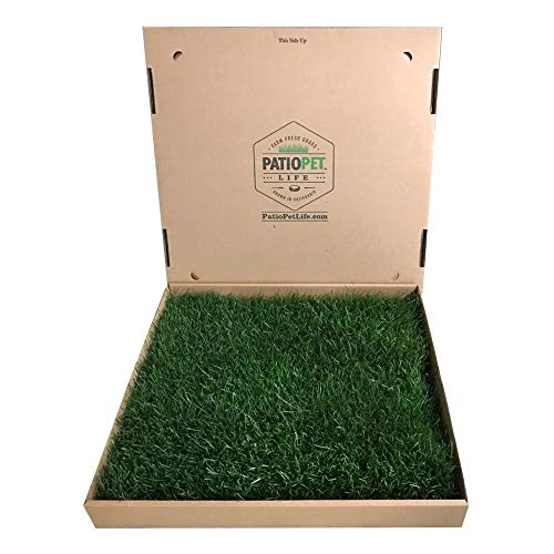Patio Pet Life Farm Fresh Pet Grass