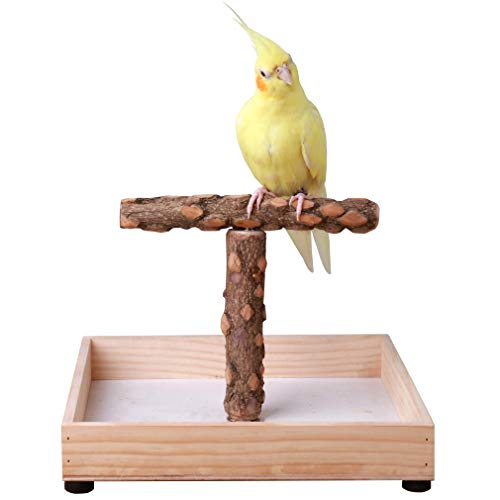 KINTOR Bird Stand Tabletop,Portable Tee Stand, Parrot Play Stand Perch Gym for Small Medium Parrot (T Stand)