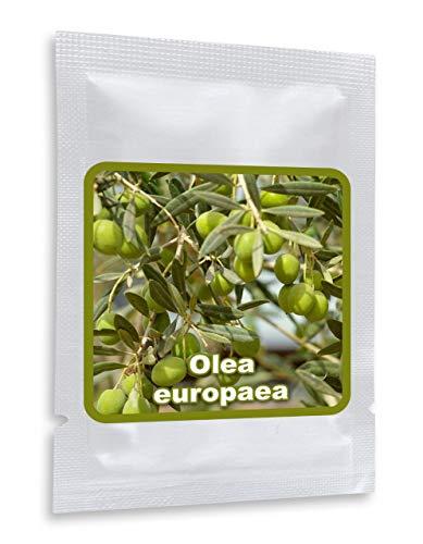 Olivenbaum - Olive - Ölbaum 10 Samen/Pack (Olea europaea) - ein Baum mit hoher Symbolkraft