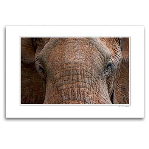 CALVENDO Lienzo Premium de 120 cm x 80 cm, Horizontal, un Motivo del Calendario emocionante: los Ojos de los Animales. Cuadro de Pared en Lienzo, diseño de Animales