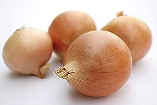 stuttgarter onion sets