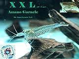 Topbilliger Tiere XXL Amano Garnele Caridina multidentata 3-5 cm 5X