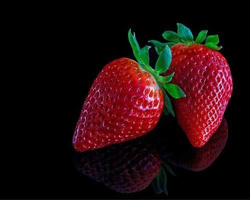 Erdbeerpflanzen 10 Fragaria Korona Pflanzen im 10er Tray Erdbeeren