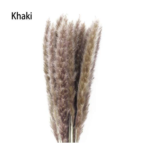 Moshone 100 PCS Natural Dried Pampas Grass Reed Home Wedding Flower Plant Bunch DIY Decor Lifelike Simulation Flower Decoration (Color : Khaki)