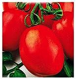 Semillas de tomate Roma v - frutas - f - tomates - lycopersicum esculenthum - las mejores semillas de plantas - flores vegetales - raras - idea de regalo original - 700 semillas aproximadamente