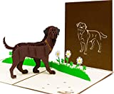 LIMAH® Pop Up Hundekarte, Geburtstagskarte Glückwunschkarte, Freundschaftskarte, Geschenkkarte, Überraschungskarte mit einem großen Hund (Labrador) und einer grünen 3D Wiese (Braun)