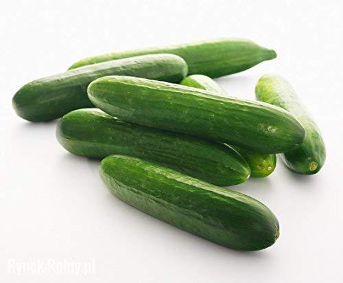 BIO - Concombre a salade - semences certifiées biologiques -