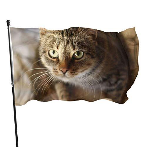 GOSMAO Bandera de 3x5 Ft Bandera de Gato en la Cama Bandera de jardín Bandera Decorativa para el hogar Bandera de Patrulla disuasoria