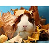 5D Full Round Drill Diamond Painting Kit, DIY Diamond Rhinestone Painting Kits for Adults Embroidery Arts Home Decor Cute Guinea Pig & Autumn Leaves 15.7x11.8 in by UM UPMALL