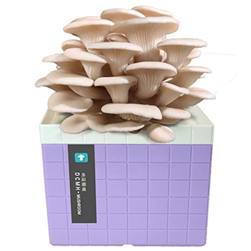 Rowe Cultive su Propio Kit de árboles de Bonsai, Kits de hábitat de Morel Morel Kit de Crecimiento de Hongos, encimera, Mesa o Bonsai. (Color : Purple)