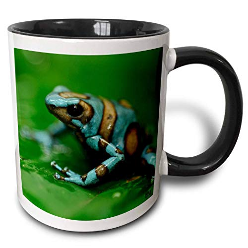 Novelty Ceramic Mug 11 oz Funny Coffee Mug Unique Gift Blue N Brown Tree Frog On A Leaf Two Tone Black Mug Multicolor Coffee Cup wiht Colored Rim and Handle for Men Women