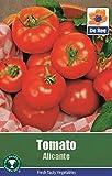 Tomatensamen Gemüse Garten - Tomate Alicante