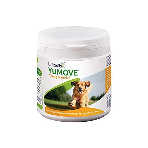 Lintbells YuMOVE Gelenk Nahrungsergänzungsmittel Ergänzungsfutter gegen Gelenkprobleme für junge und aktive Hunde, 240 mundgerechte Gelenktabletten