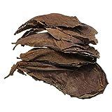 Balacoo - Lote de 10 hojas de catappa para acuarios y acuarios, para mejorar la calidad del agua PH-Principalmente aplicable a Arowana y a la mayoría de los peces tropicales.