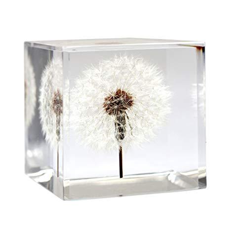 Dandelion Collective LLC Briefbeschwerer Pusteblume Cube–Ein Echter Pusteblume Puff. Cube (Quader) Cube (2.25