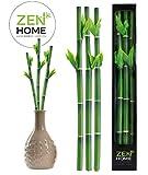 BAMBOO PORTE CHANCE, ornement de plantes artificielles - Bambou artificiel - Plantes artificielle - Cadeau porte-bonheur - Décoration maison et cuisine - Porte-bonheur - décoration Zen