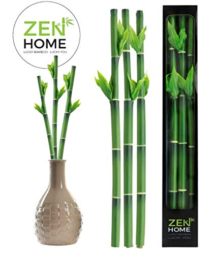 Zen Home Plantas Artificiales, Plantas Artificiales Decorativas, decoración casa, Plantas Artificiales decoración, Planta Artificial, Decoracion hogar, Planta Artificial Bambu, Bambu DE LA Suerte