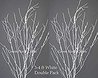 tall white birch branches