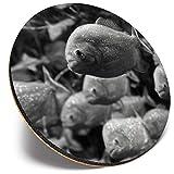 Posavasos redondo único – BW – Pez Piraña de acuario | Posavasos de calidad brillante | Protección de mesa para cualquier tipo de mesa #35929