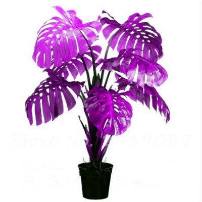 De nouvelles semences 100 Pcs Mixed Philodendron Graines couleur parfaite Plantes d'intérieur Anti radiations Absorber arbre poussière Jardinerie Bonsai 12