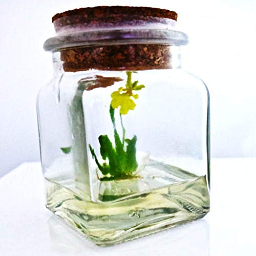 Miniature orchid glass terrarium