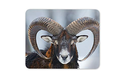 Mufflon Ovis Orientalis Mauspad Pad - Berg Schnee Schafe Computer-Geschenk # 16860