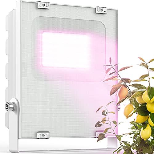 Meine Orangerie - LED Pflanzenlampe zur Überwinterung von mediterranen Pflanzen - Entwickelt mit den Zitruspflanzen-Profis von Meine Orangerie - Vollspektrum Pflanzenlicht (20)
