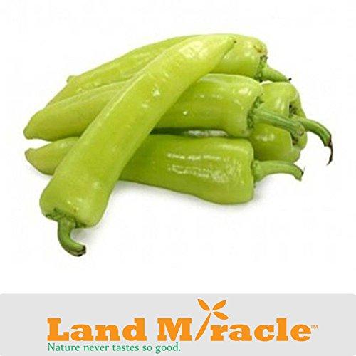 Rillettes semences de légumes, 20 graines / paquet Sweet Banana Pepper / Wax Yellow Chilli (Capsicum annum) Terrain Miracle # M448