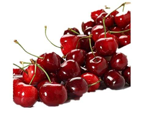 KINGDUO 20 Piezas/Bolsa Cereza Semillas Hogar Fruta Interior Bonsai Enano Cerezo Plantación De Semillas