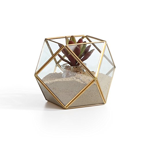 Geometric brass and glass terrarium for succulents