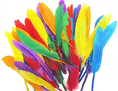 Quill Feathers Assorted Colours 14cm Art Crafts Collage Fly Fishing Dress Up Hats by Kids B Crafty