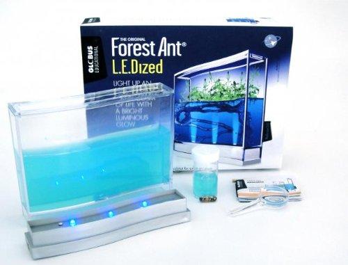 Hormiguero de Gel Azul con LUZ y SEMILLAS (Hormigas incluidas Gratis)