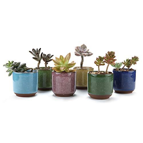 T4U 6.5CM Keramik Sukkulenten Töpfe Kaktus Pflanze Töpfe Mini Blumentöpfe EIS Crack Höher Serie 6 Fraben 6 Stücke Set