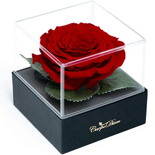 Carpe Diem Infinity Rosenbox mit echte Ø 8cm XL-Rose 3 Jahre haltbar | Besondere Deko u. Geschenk (Dekobox, Bordeaux)