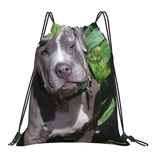 Mochila con cordón para fitness al aire libre, portátil, ajustable, impermeable, para deportes, magnífico bebé Pitbull cachorro perro (cabeza inclinada)